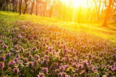 Little purple flowers in beautiful morning light stock vector