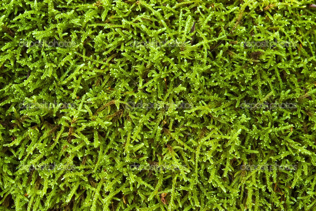 Moss background