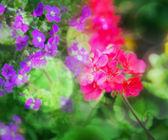 Květiny pozadí
