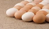 Fotografie Lot of eggs