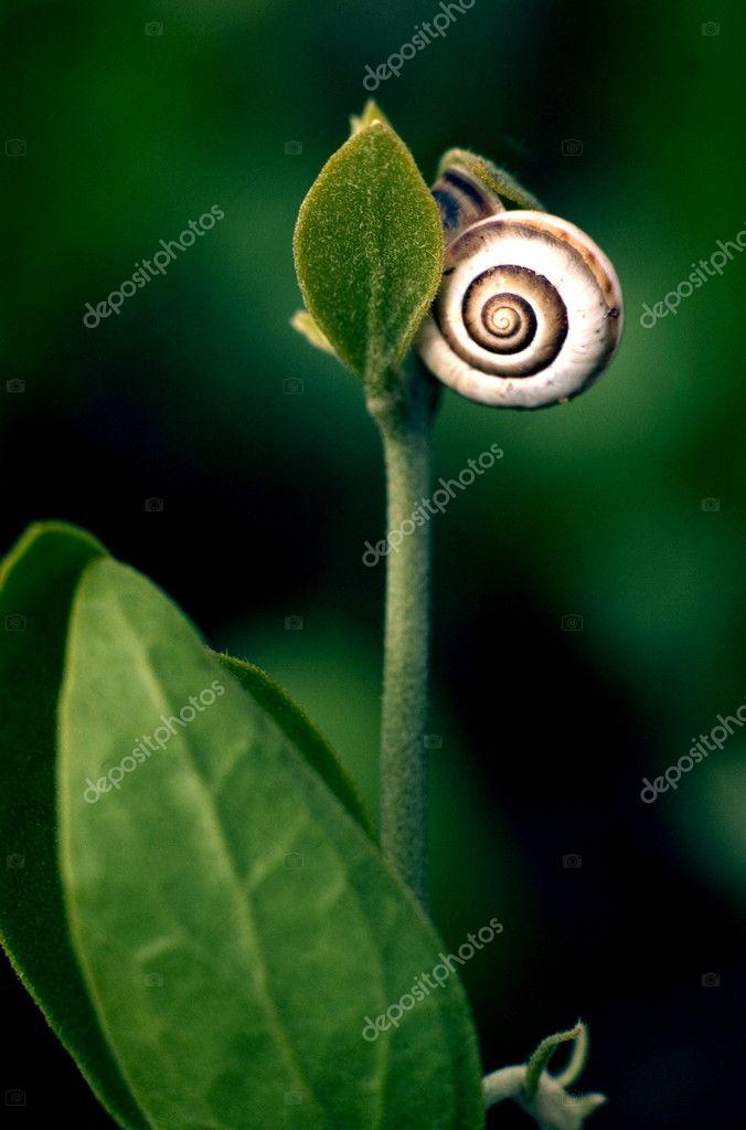 Wildlife Photos - Snail