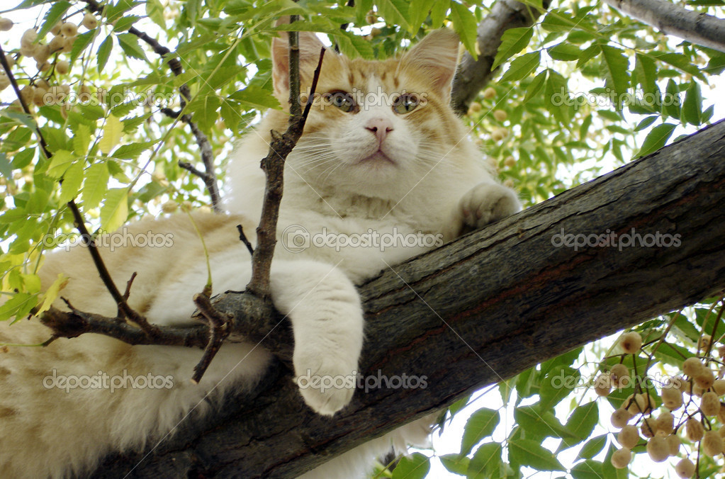 Wildlife Photos - Cats