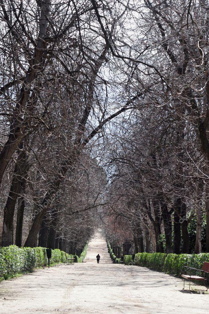 Man walks path in park alone