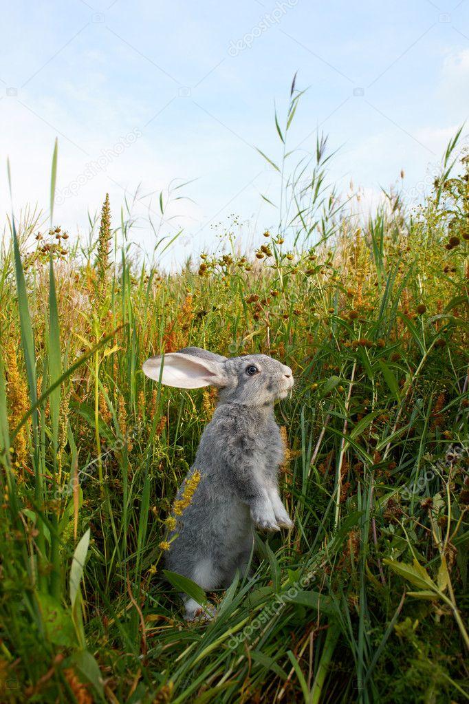 Bunny in grass