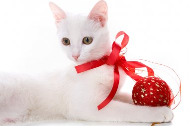 Decorated kitten