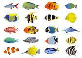 Fotografie Satz von tropischen Fische