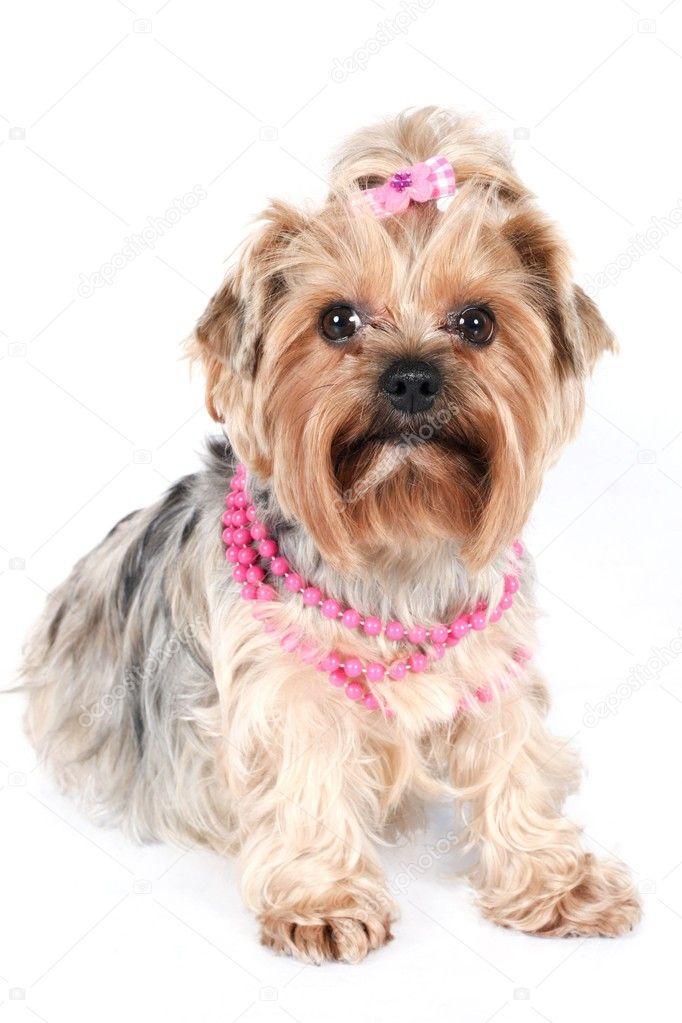 26c8a2732 glamour yorkshire v růžový náhrdelník — Stock Fotografie ...