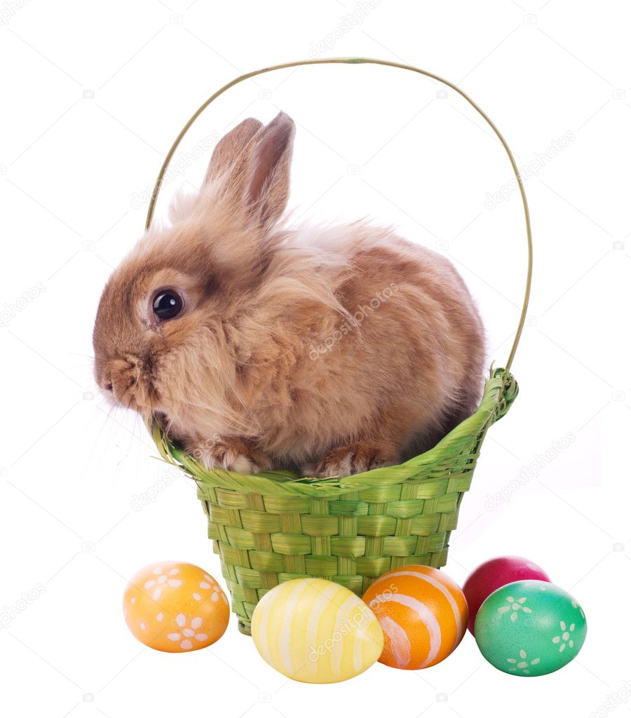 Fancy rabbit in the basket