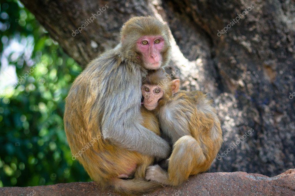 Two monkeys in Kathmandu, Nepal