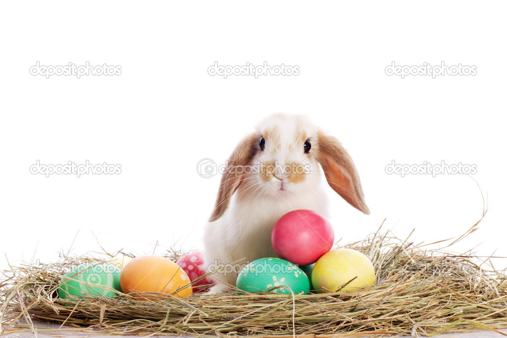 Funny rabbit and easter eggs