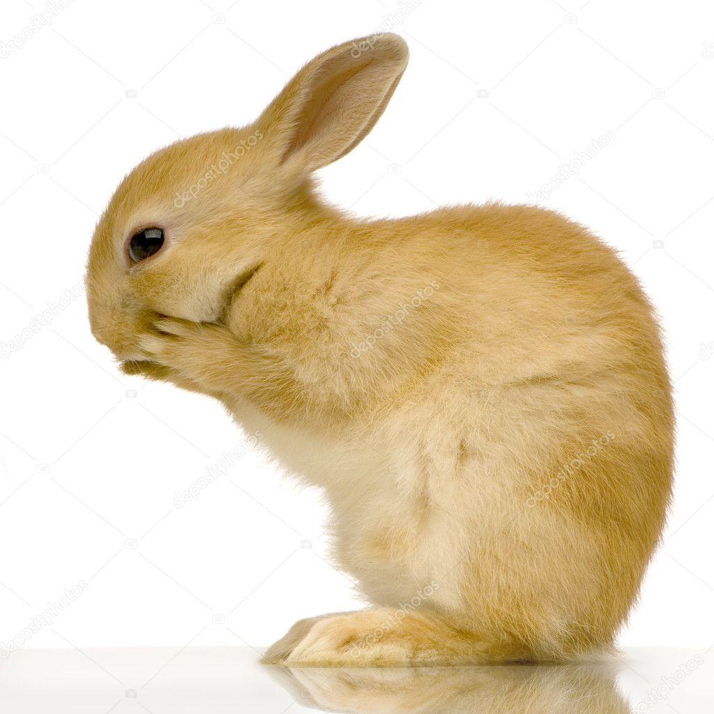 Dating rabbit