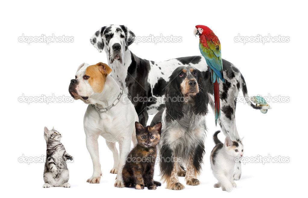 Group of pets standing in front of white and brown background