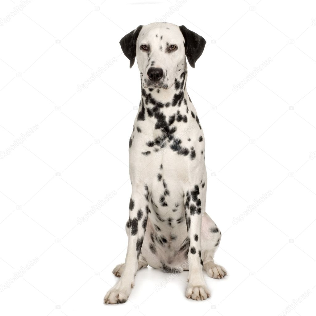 Brown Spotted Dog Breeds