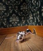 Séta a régi vágású szoba egerek csoportja