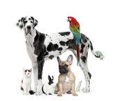 Fotografie Gruppe von Haustiere - Hund, Katze, Vogel, Reptil, Kaninchen
