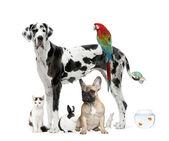 Gruppe von Haustieren vor weißem Hintergrund, Studioaufnahme