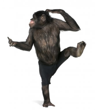 Monkey dancing on one foot