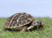 Photo Turtle on grass against a blue sky