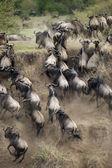 Fotografie PAKŮŇ v Africe serengeti, Tanzanie,