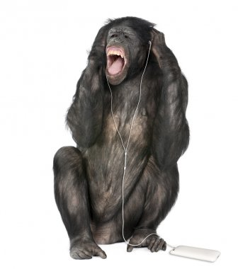 Mixed breed between Chimpanzee and Bonobo listening to music, 20 years old, in front of white background, studio shot