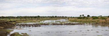 Wildebeest in river in the Serengeti, Tanzania, Africa