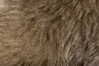 Close-up of Young Pileated Gibbon's fur, 1 year , Hylobates Pileatus stock vector