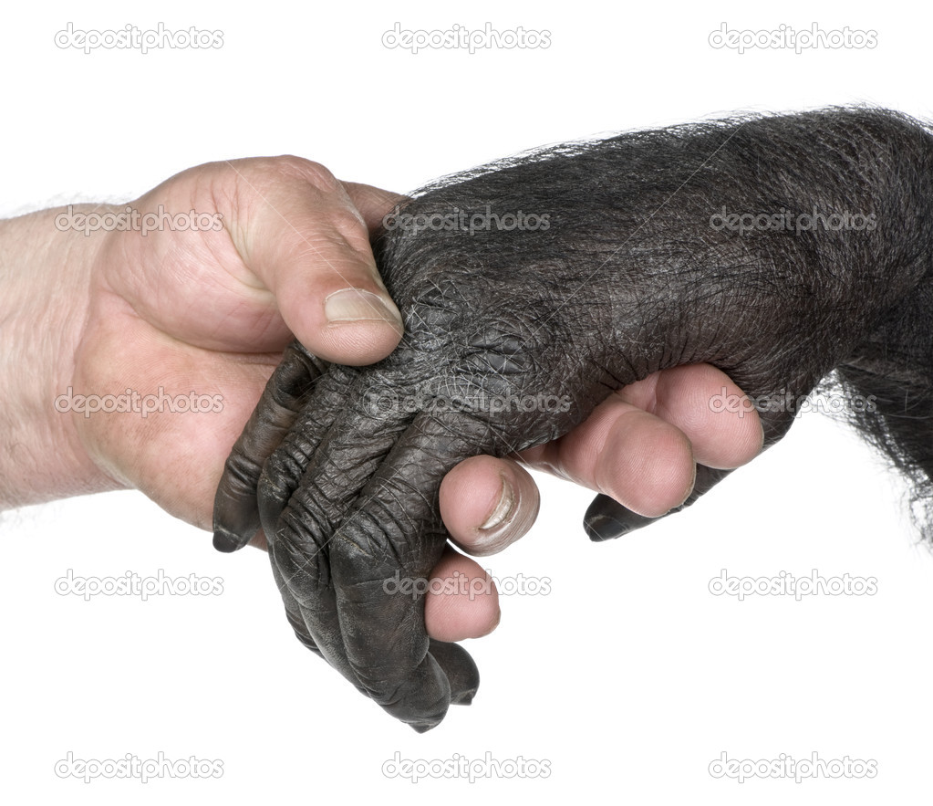 Image result for pictures of animals four hands