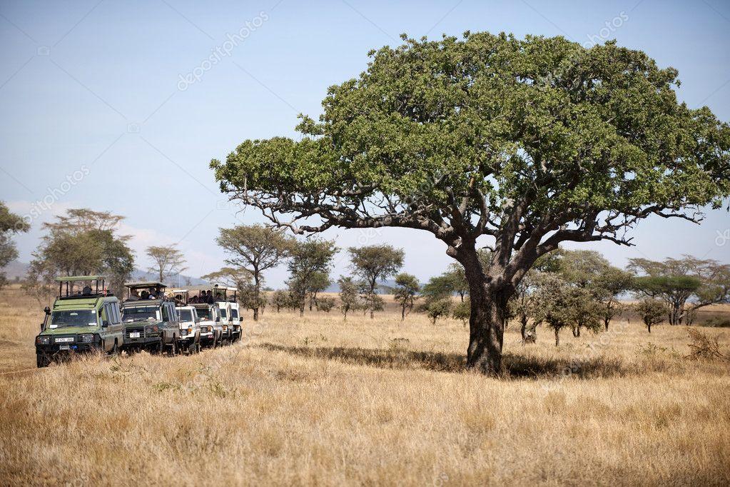 Vehicles on safari in Serengeti National Park, Serengeti, Tanzania, Africa