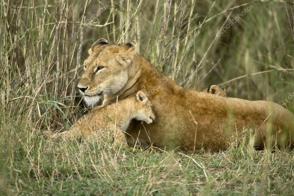 Lioness and her cub, Serengeti National Park, Serengeti, Tanzani