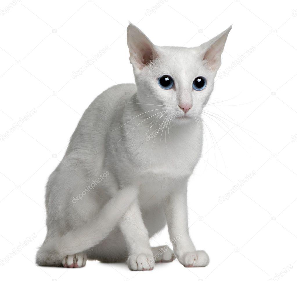 Год перед котом