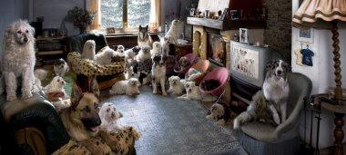 """Картина, постер, плакат, фотообои """"портрет 24 собак в гостиной перед телевизором постеры животные белые"""", артикул 10892125"""
