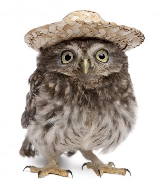 Young owl wearing a hat in front of white background