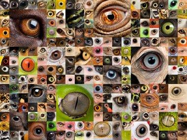 Montage of animal eyes
