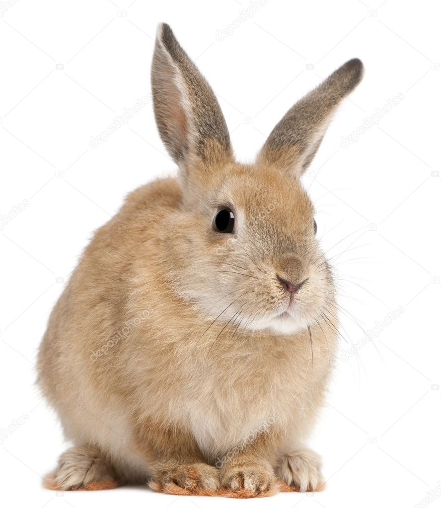 Bunny rabbit in front of white background stock photo - Photo de lapin a imprimer ...