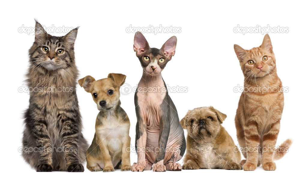 an analysis of the similarities and differences between cats and dogs 10 differences between cats and dogs animal differences cats pet advice pet tips expert analysis and commentary to make sense of.