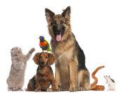 Fotografie Gruppe von Tieren vor weißem Hintergrund