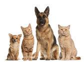 Fotografie Gruppe von Hunden und Katzen sitzen vor weißem Hintergrund