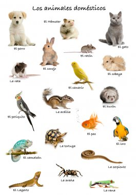 Collage of pets and animals in Spanish in front of white background, studio shot