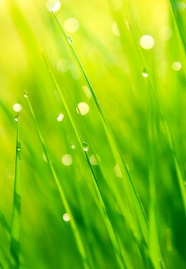 Dewdrops on green grass