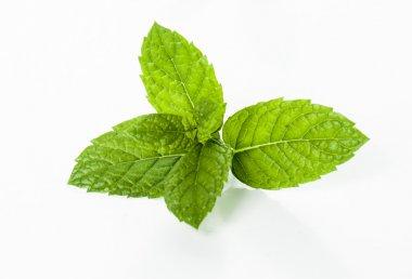 Mint leaf