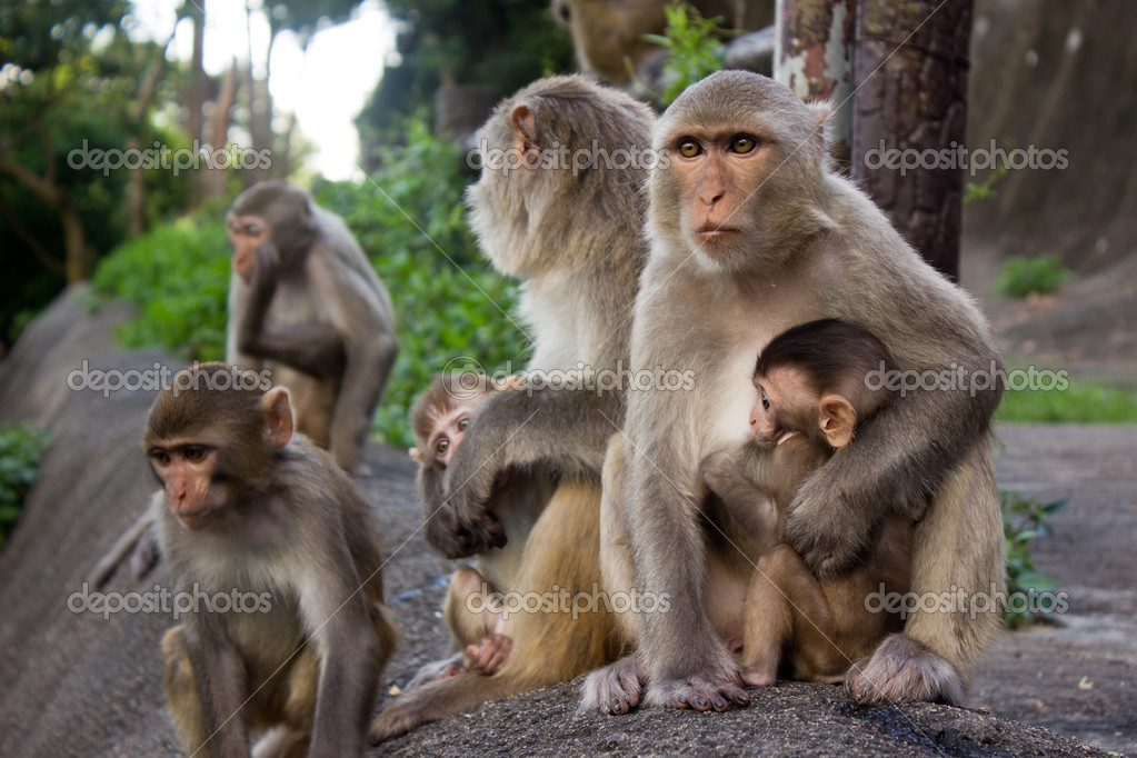 Monkeys in jungle on the mountain
