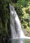 Wasserfall bei sao miguel (Azoren-Inseln))