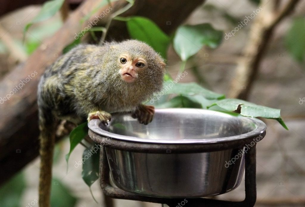 Cute little monkey while feeding