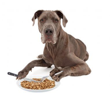Great Dane Dog Eating Food with Utensils