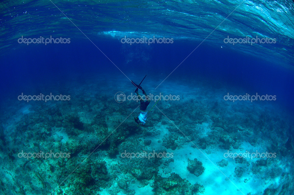 Man free diving and spear fishing