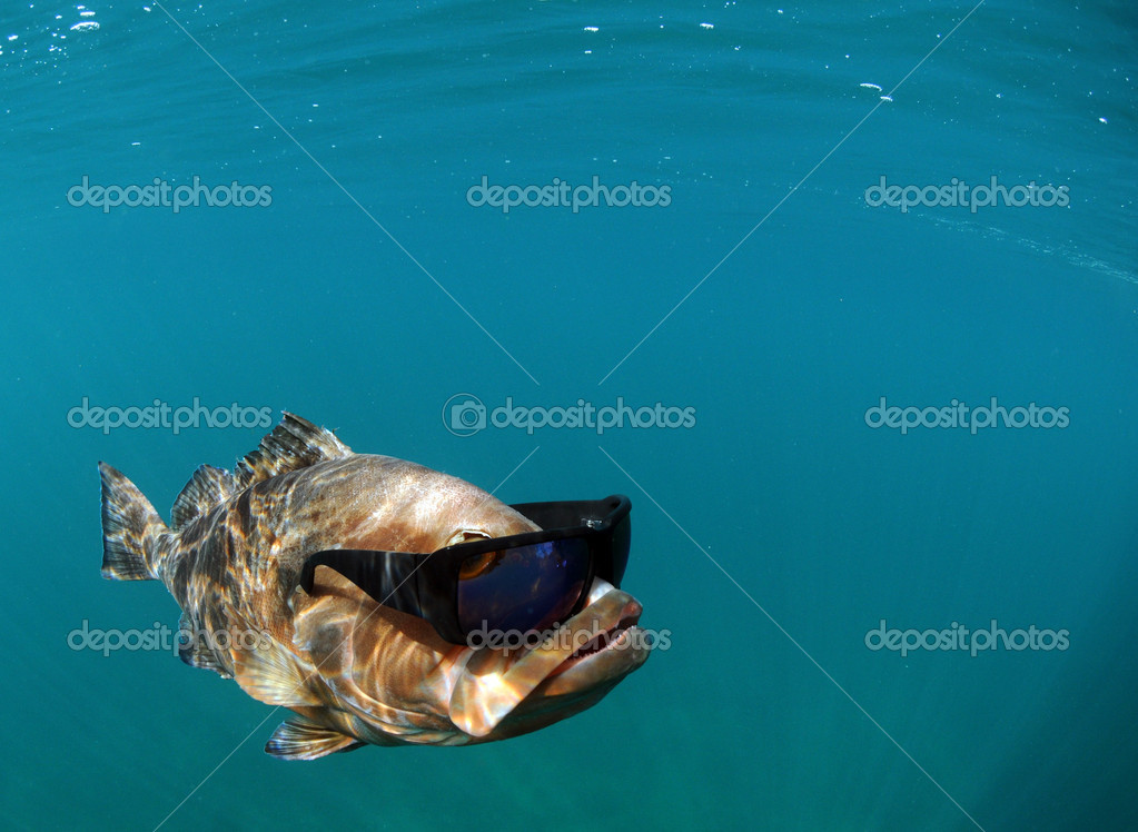 Cool fish wearing sunglasses