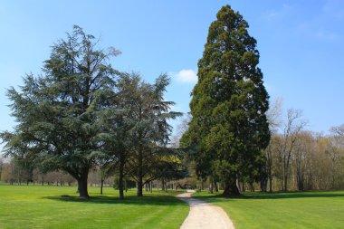 Garden of the Cheverny Castle