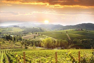 Vineyeard in Chianti, Tuscany, Italy