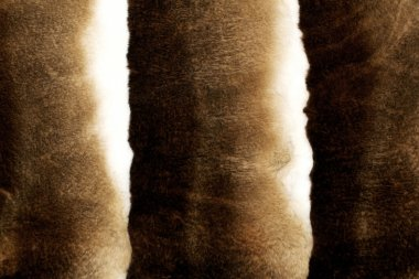 Fur mink background