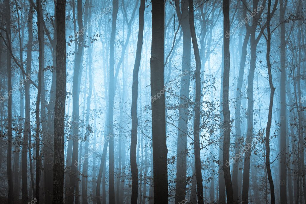 Dark blue spooky forrest with trees in fog